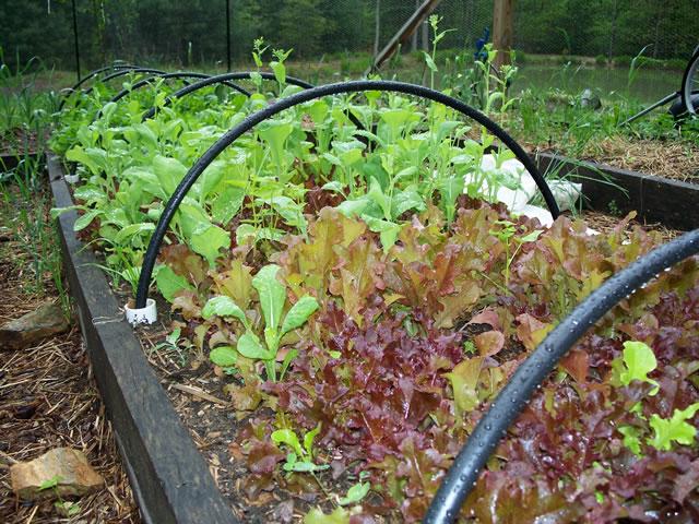 brightwood-garden