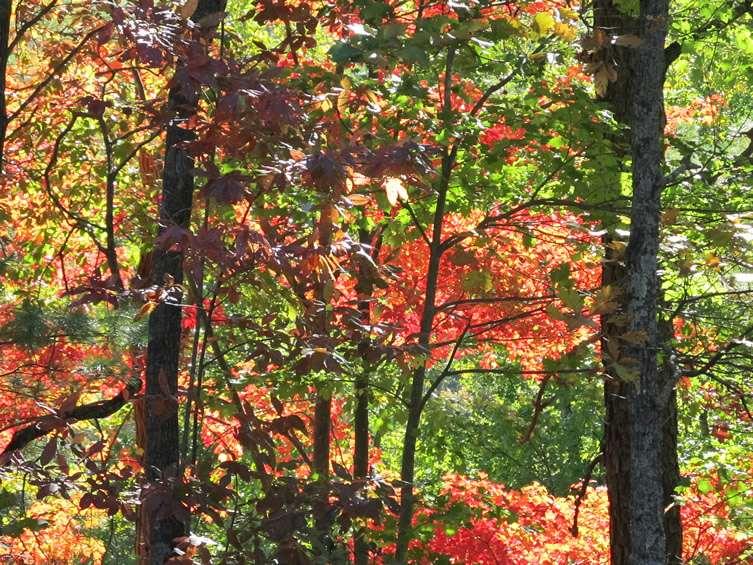fall2011-2