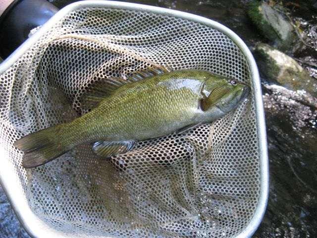fish-laurelcreek-4