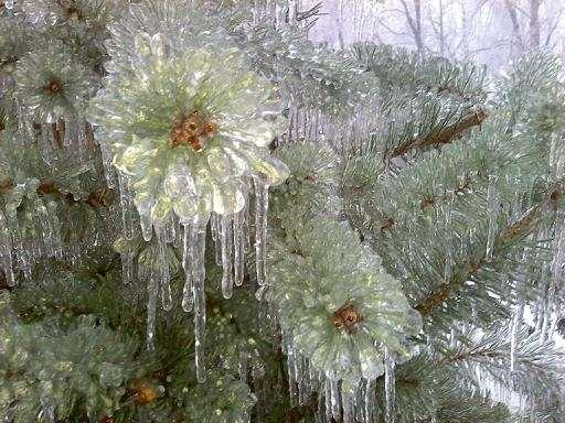 icestormchristmas2009_2