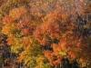 fall2011-4