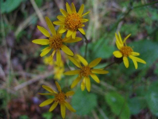 yellowflower-2