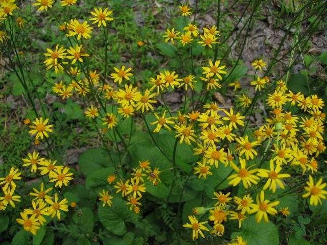 yellowflower-3